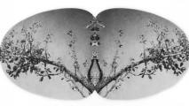 art, Perceptual-Ecology-Matt Chivers, crop, (hermaprhodite) 1172x1200