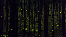 nn, photo, fireflies forest, yume cyan, -5