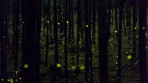 nn, photo, fireflies forest, yume cyan, -5