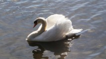 Swan_Meadowlands_Class_Trip