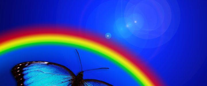 butterfly-765126